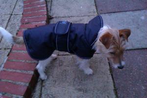 bertie new coat