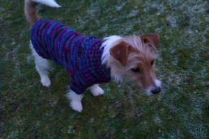 bertie new jumper